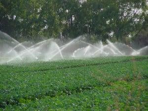 Irrigation Pulse 7