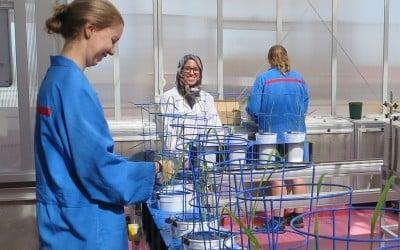 Australian Plant Phenomics Facility Internship: applications closing soon!