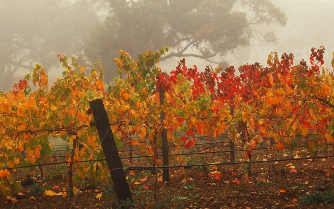 046852_vineyards