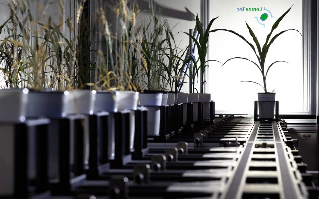 An opportunity to access phenotyping capabilities for plant science research projects