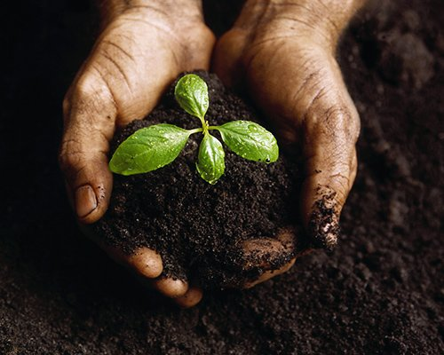 Fertile ground: what you need to know about soil to keep your garden healthy