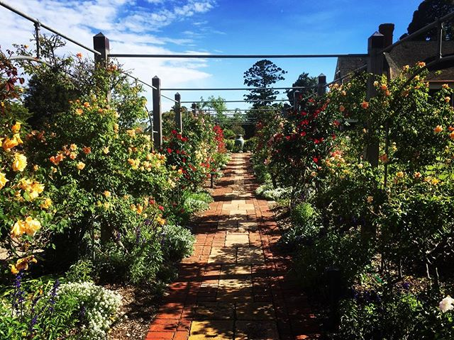 Urrbrae House Gardens and Waite Arboretum need your help!