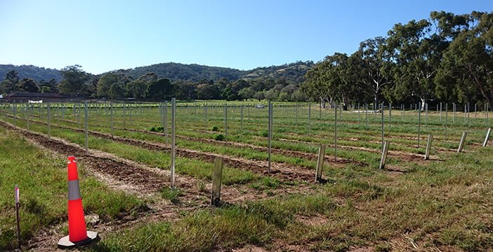Coombe vineyard expansion means more grapevines at Waite
