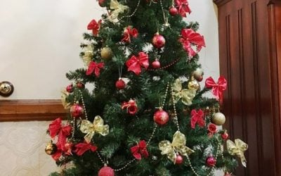 Giving Tree at Urrbrae House