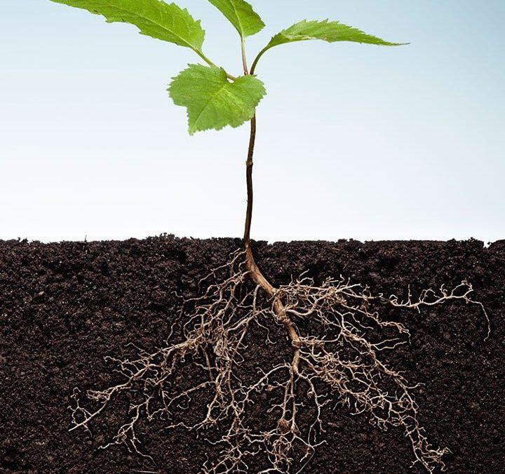 plant-roots-crop