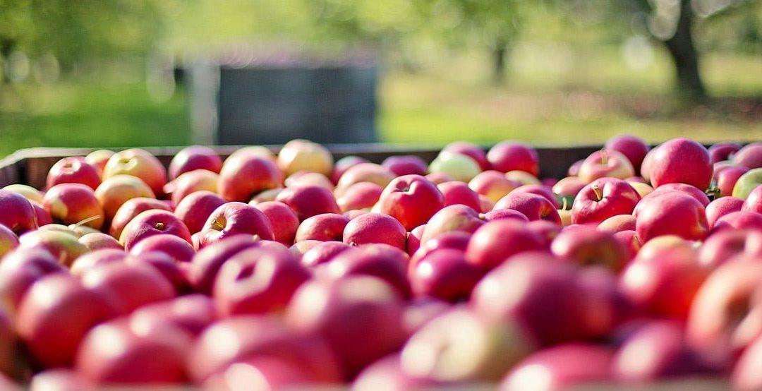 apples-crop