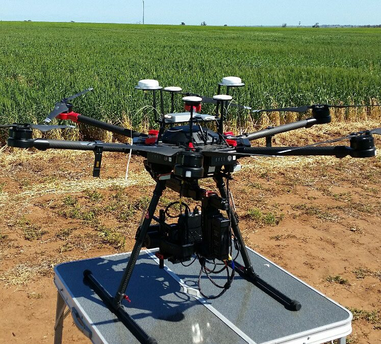 Accuracy of drone measurements of crops determined