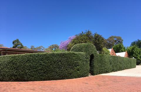 Explore the Urrbrae House sensory garden!