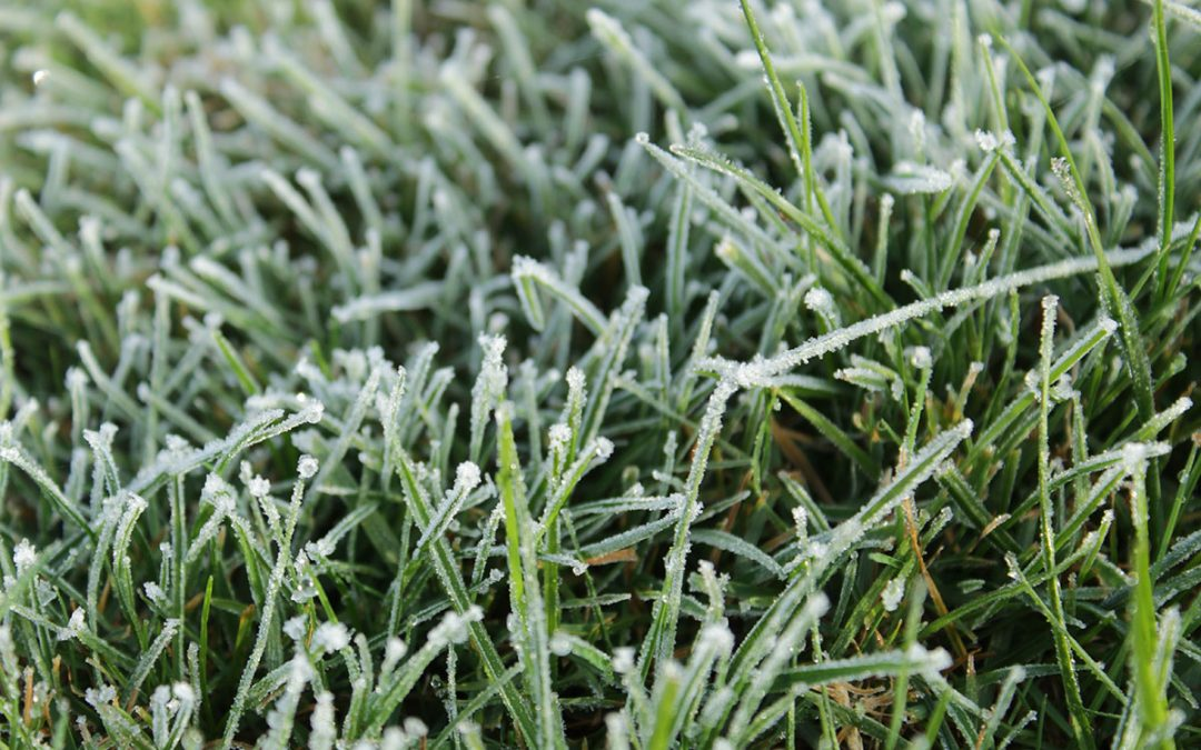 Frost forecast? Delay the spray, say weed scientists