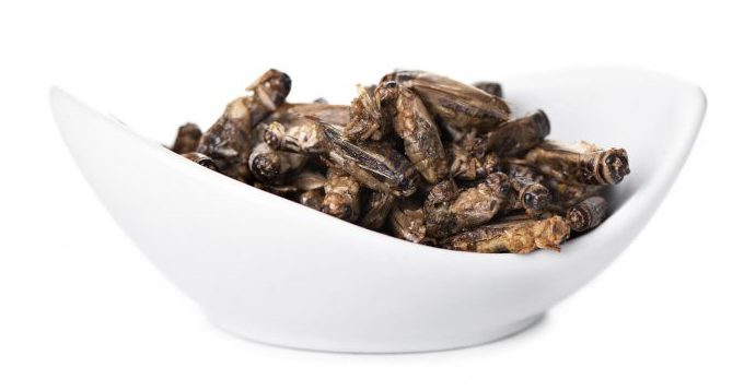 fried crickets in a bowl