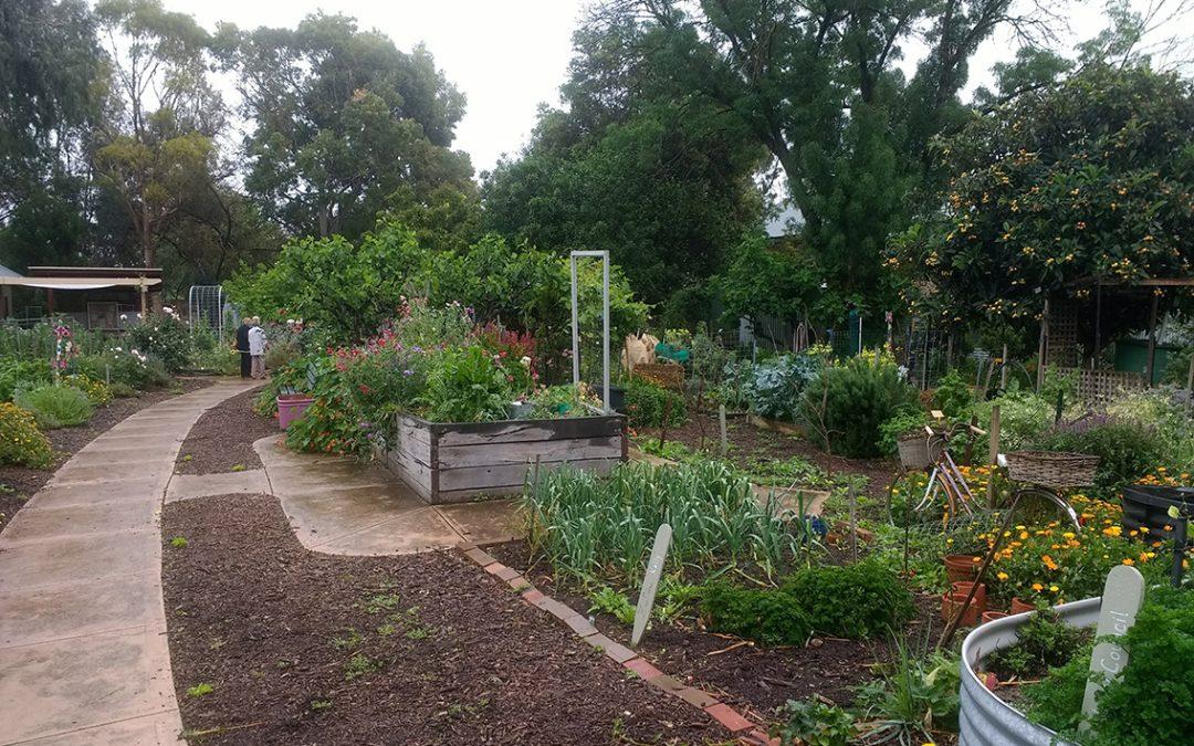 Fern Ave Community Garden_SMALL