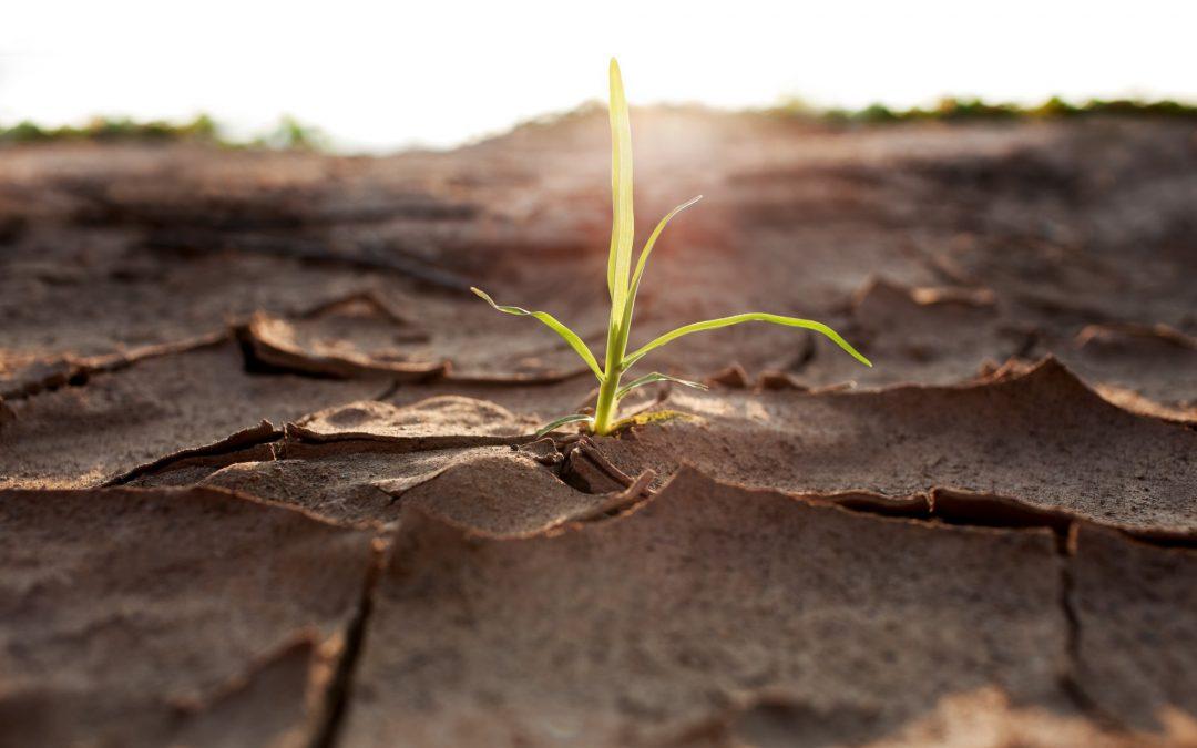 Animal stress signal improves plant drought tolerance